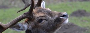 Tierpark - Sehenswürdigkeiten im Harz