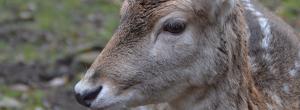 Aktivurlaub im Harz -Tierpark Christianental