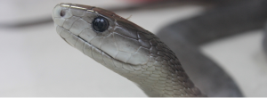 Schlangenfarm Schladen