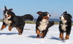 Wandern mit Hund im Harz