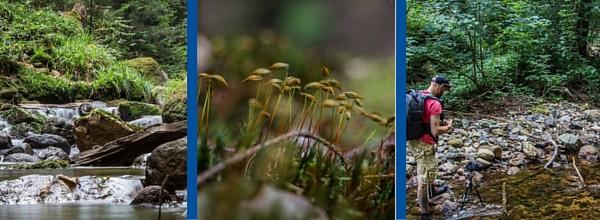 Das wildromantische Ilsetal gehört zu Katrins Liebslingskulissen ©Numi's Motivkiste