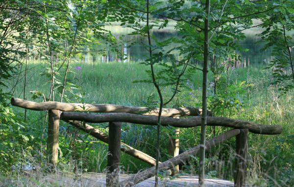 Teich im Harz