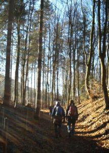 Wald bei Goslar