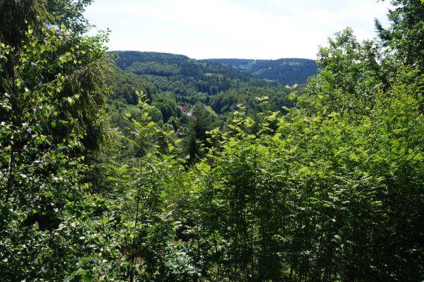 Weltwald Harz